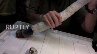 Philippines: Scientists discover legendary five-foot long shipworm
