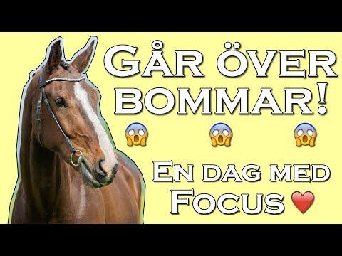EN DAG I STALLET - Med Focus
