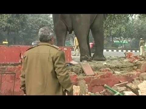 Delhi: Elephant goes berserk near Rajghat