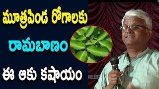 మూత్రపిండ రోగాలకు రామబాణం ఈ ఆకు కషాయం   Khadar Vali Diet   Telugu Tv Online