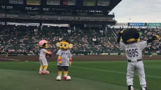 2016/06/15 阪神対オリックス戦 選手紹介時のトラッキー ラッキー キー太