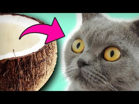 Kokosöl bei Katzen - 8 Tipps zur Anwendung
