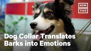 Smart Dog Collar Interprets Pet's Emotions