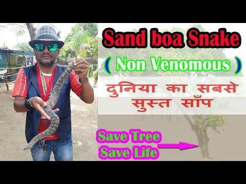भारत का सबसे धीरे धीरे चलने वाला साँप(Sand boa) non venomous snake rescue team Panchet dam(N G O)