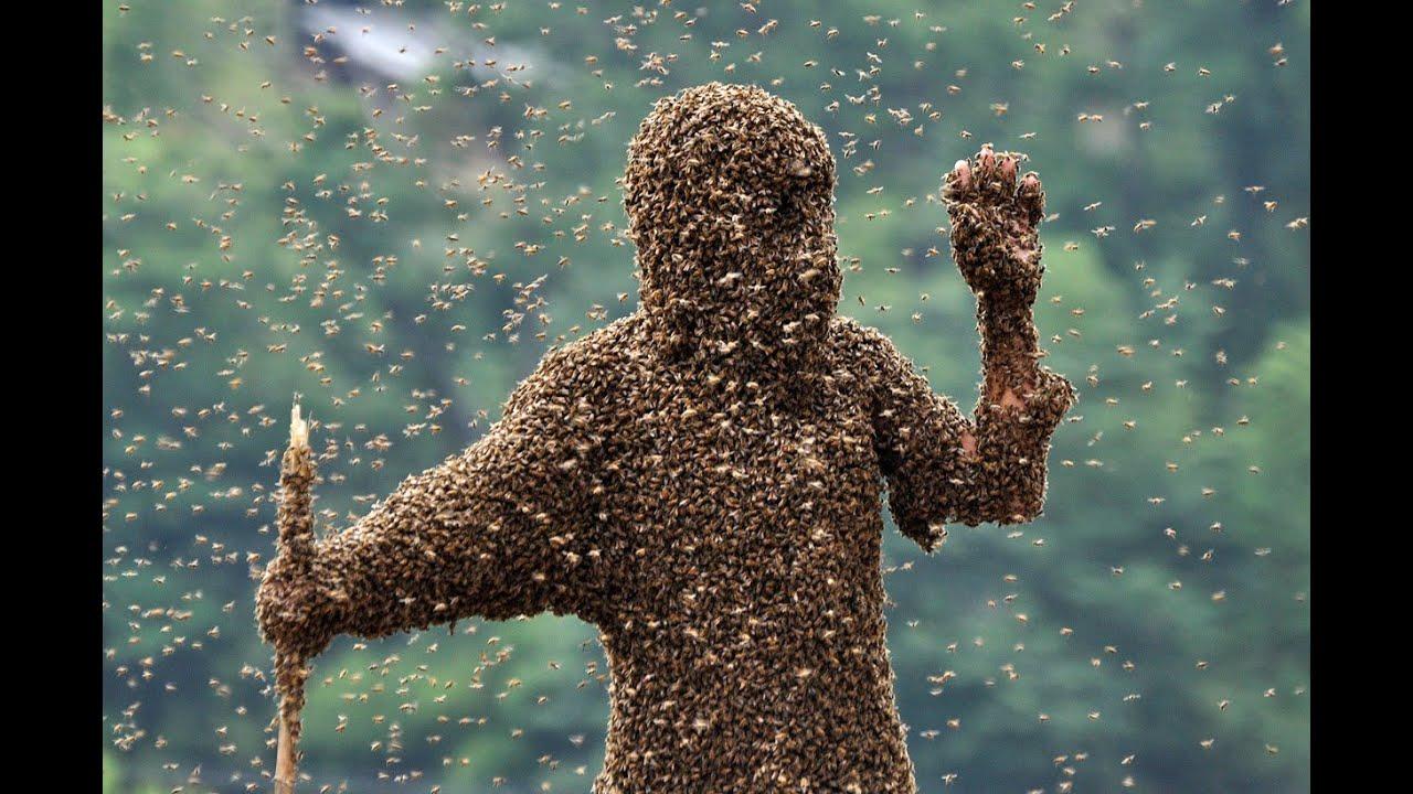 Клипарт нашествие насекомых фото 449-693