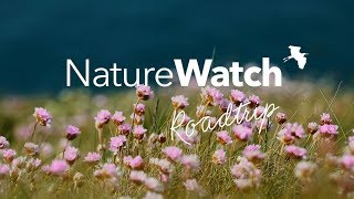 NatureWatch Road Trip Part 1