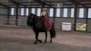 Friesian Stallion Frederik the Great performing at Twin Springs Equ...
