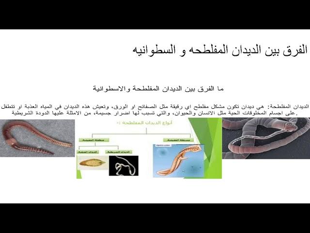 مقارنة بين الديدان المفلطحة والديدان الاسطوانية سيد حسن باقر علي ناصر Youtube