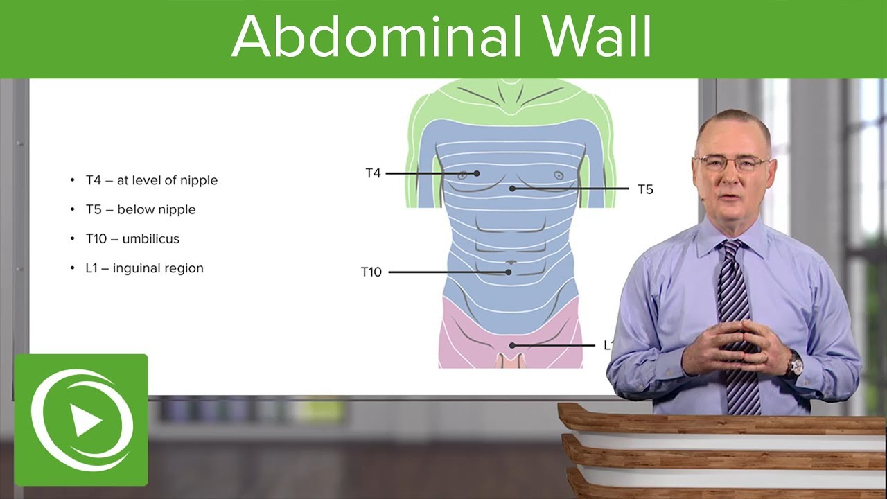Abdominal Wall – Anatomy | Lecturio
