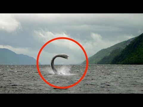 10 Kürzliche Sichtungen echter prähistorischer Tiere!
