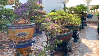 2 vườn Bonsai ở hai miền khác nhau nhưng chung phong cách chơi hoa