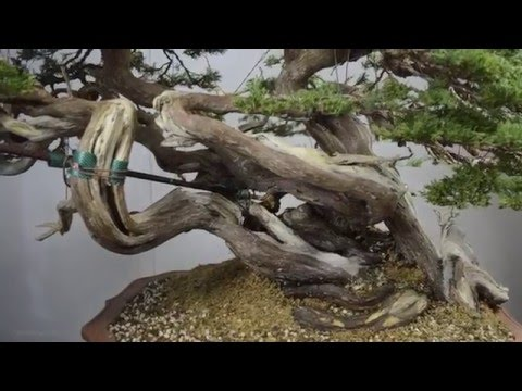 Time-lapse at Bonsai Sense 2016