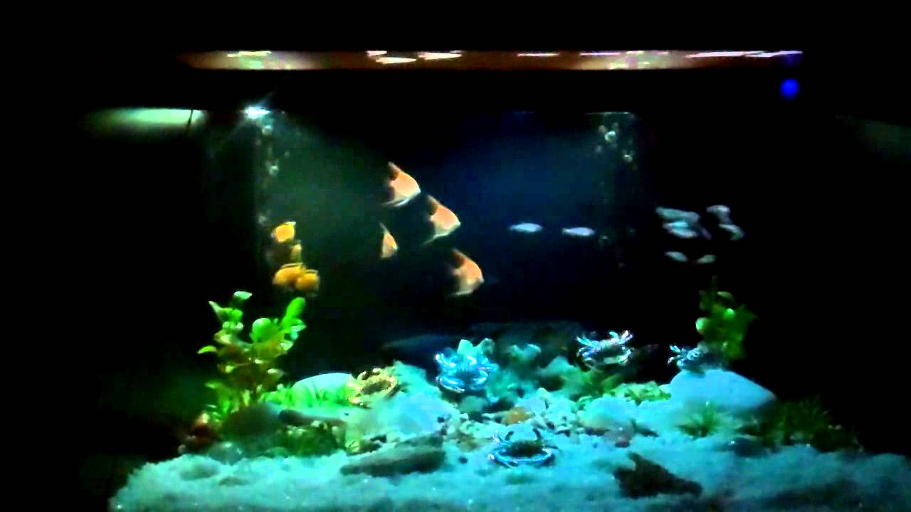 Holographic fish tank youtube for Youtube fish tank