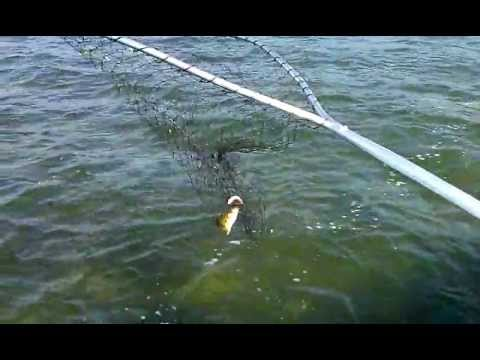 Fishing lesson how to catch a jumbo on cass lake 2012 for How to catch fish in a lake