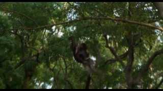 KAMUI THE LONE NINJA (2009)