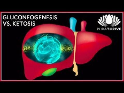 Gluconeogenesis vs. Ketosis: Fat to Protein Ratio | PuraTHRIVEThomas DeLauer