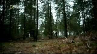 15:26 Masacre en Noruega Capitulo 3 Final Tiroteo en Utøya y Condena