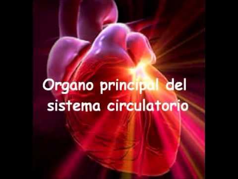 Organos Vitales - YouTube