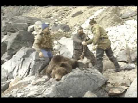 CLASSIC SIBERIAN BROWN BEAR KILL SHOT