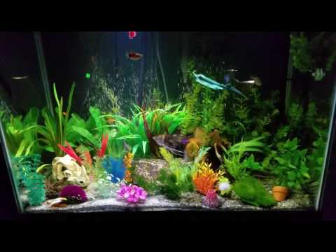 Aquarium Basics- Temperature
