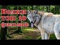 Волки ТОП 10 лучших фильмов