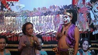 Ciblek vs Bawor Banyumas Lucune poll 😂😂👍