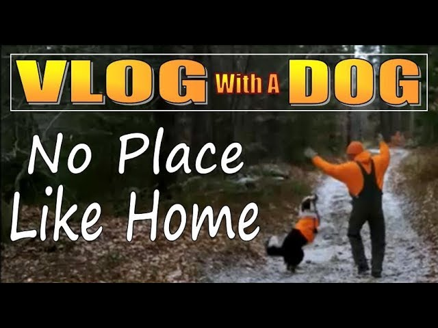 ANSWERS AND UPDATES ON OUR OFF GRID CABIN LIFE Vlog with a Dog 16