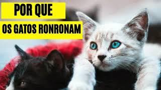 Neste Vídeo Vou Ti Conta Por que os gatos ronronam - Assista Esse Vídeo e Descubra