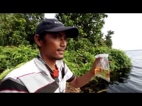 Serkap River Sumatra Hidden paradise