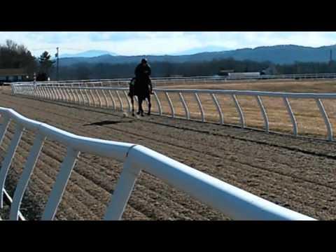 Bluegrass Cat filly galloping