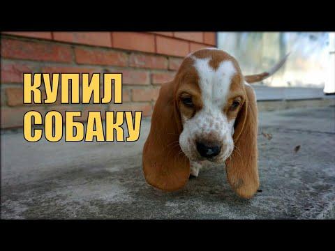 КУПИЛ СОБАКУ
