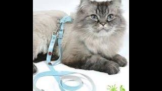 Для кошек. Аксессуары для кошки