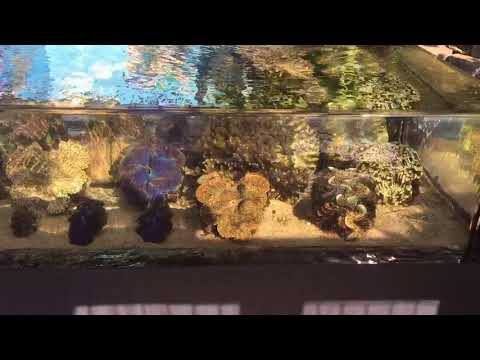 The first zero edge aquarium in Hawaii