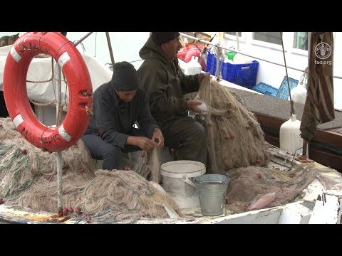 Partnering With Fisheries Communities To Promote Pescatourism In Turkey's Gulf Of Gökova