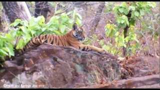 Bandhavgarh National Park   India   Video Tour