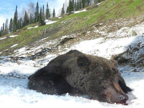 Bear Hunt in Russia. Spot & Stalk.