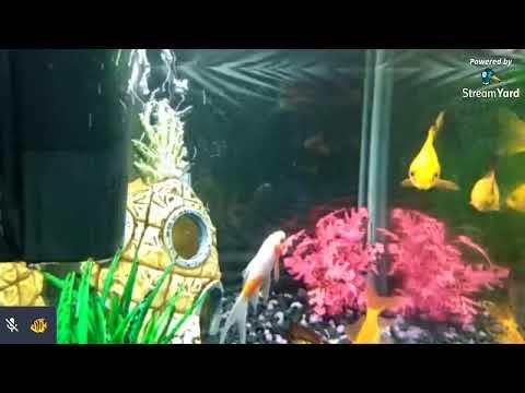 Live Fish Tank