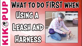 What to do FIRST  Getting Started with Leash Training