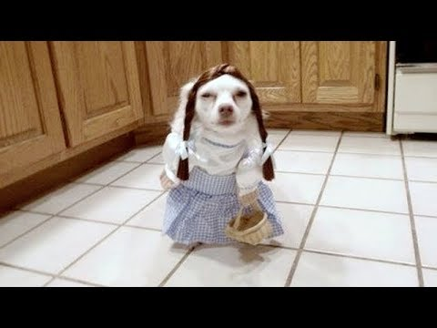 Warning: SO FUNNY that it MIGHT KILL YOU! – Super FUNNY DOG VIDEOS compilation