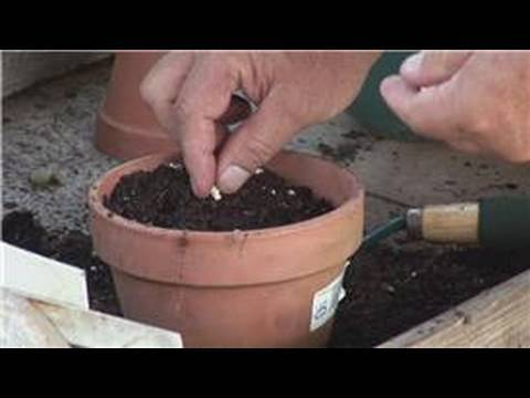 Gardening From Seeds How To Plant In A Container