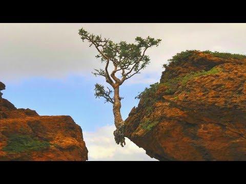Как Растут Деревья Вопреки Здравому Смыслу