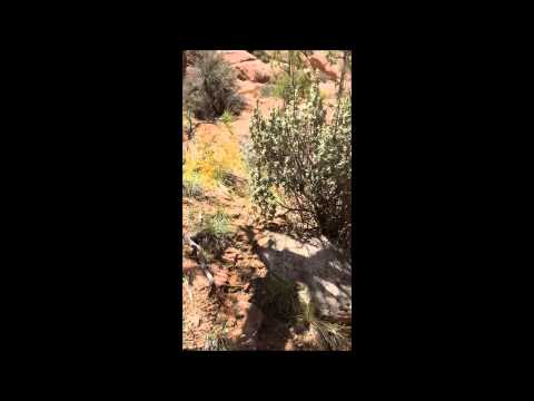 Fish Creek And Owl Canyon