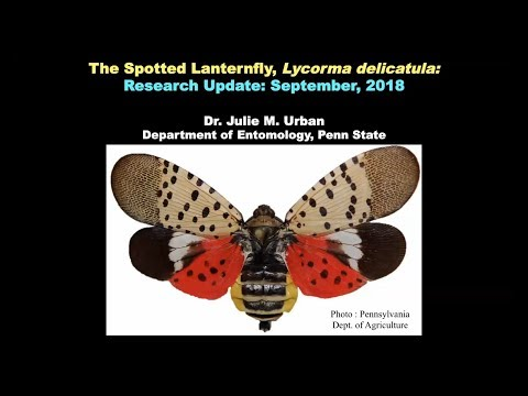 Craig Stevens - Scientists import wasps from China to battle the spotted lanternfly