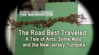 The Road Best Traveled: A Tale Of Ants, Slime Mold And The New Jersey Turnpike