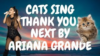 Cats Sing Thank You, Next by Ariana Grande | Cats Singing Song