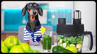 Easy detox with funny dox! Cute & funny dachshund dog video!