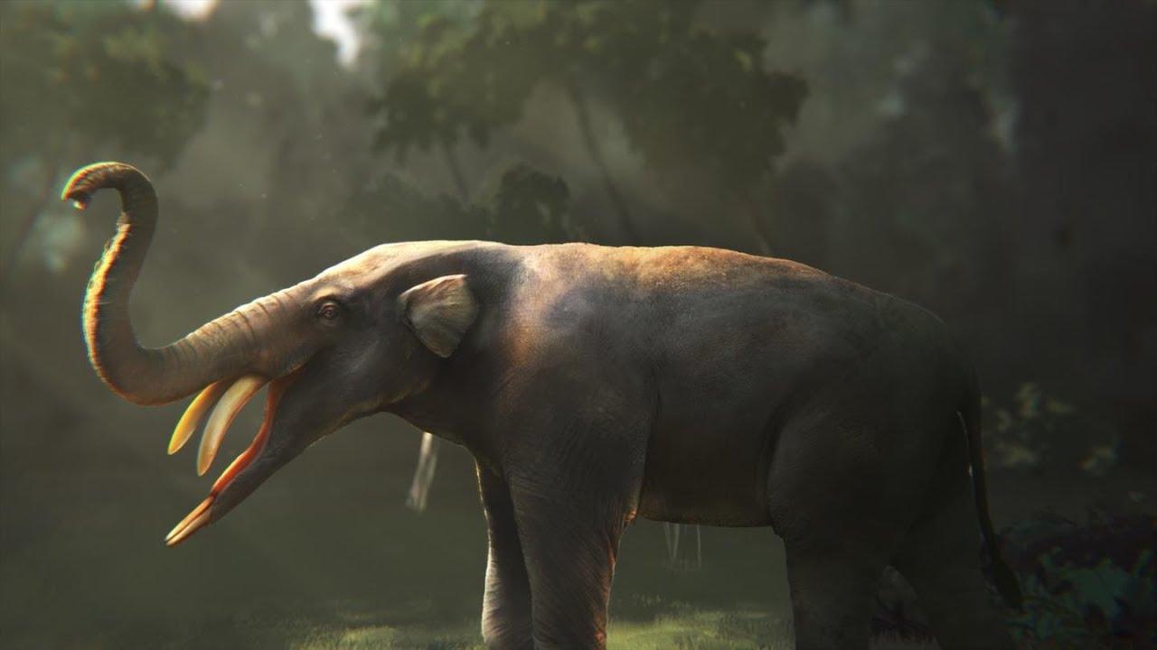Amebelodontidae: The Shovel Tuskers