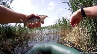 Рыбалка в камышах  Первое пробное видео блин
