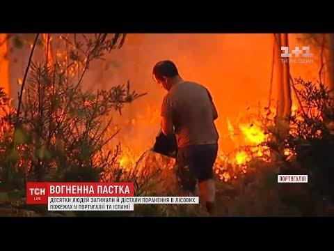 ТСН: Десятки людей загинули у лісових пожежах у Португалії та Іспанії