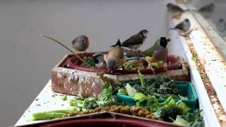 Finches Eating in Mixed Aviary
